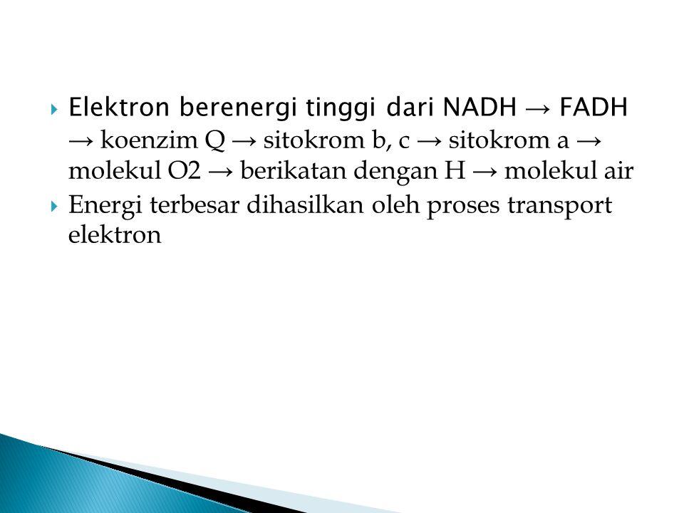  Elektron berenergi tinggi dari NADH → FADH → koenzim Q → sitokrom b, c → sitokrom a → molekul O2 → berikatan dengan H → molekul air  Energi terbesa