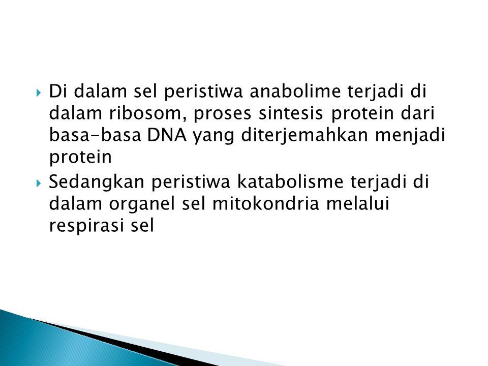  Di dalam sel peristiwa anabolime terjadi di dalam ribosom, proses sintesis protein dari basa-basa DNA yang diterjemahkan menjadi protein  Sedangkan peristiwa katabolisme terjadi di dalam organel sel mitokondria melalui respirasi sel