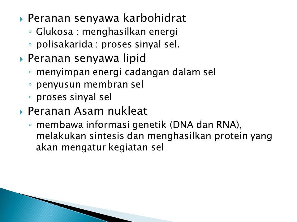  Peranan senyawa karbohidrat ◦ Glukosa : menghasilkan energi ◦ polisakarida : proses sinyal sel.  Peranan senyawa lipid ◦ menyimpan energi cadangan