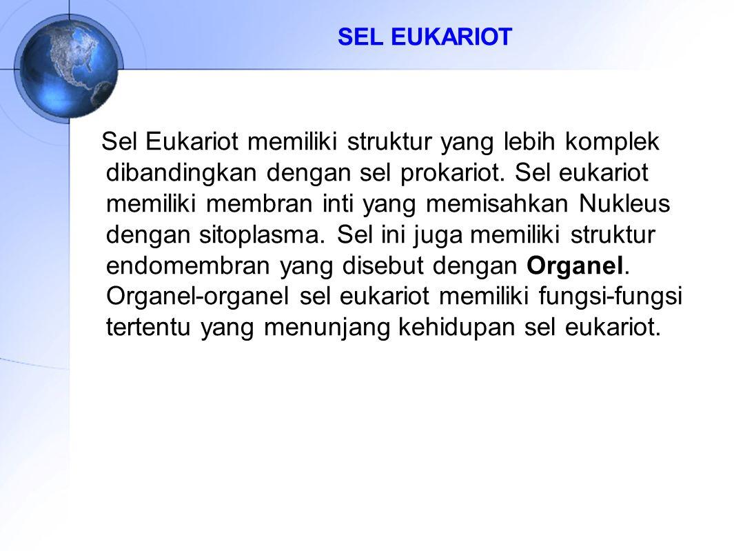 SEL EUKARIOT Sel Eukariot memiliki struktur yang lebih komplek dibandingkan dengan sel prokariot. Sel eukariot memiliki membran inti yang memisahkan N