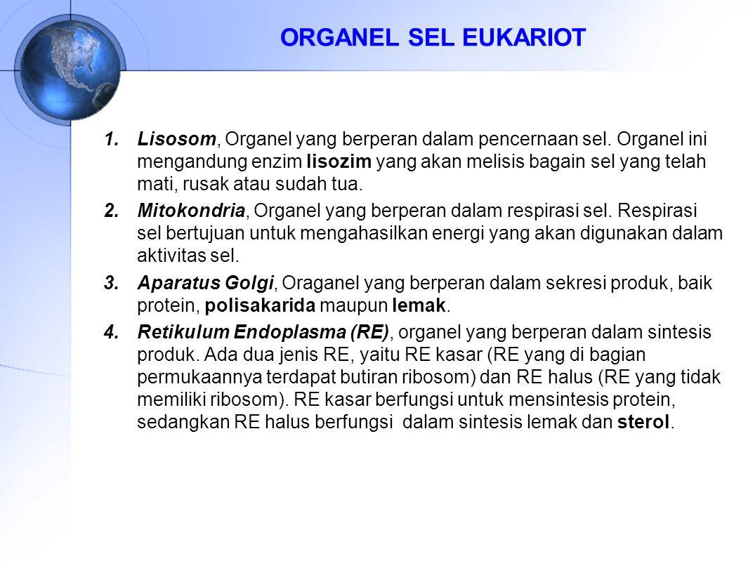 ORGANEL SEL EUKARIOT 1.Lisosom, Organel yang berperan dalam pencernaan sel. Organel ini mengandung enzim lisozim yang akan melisis bagain sel yang tel