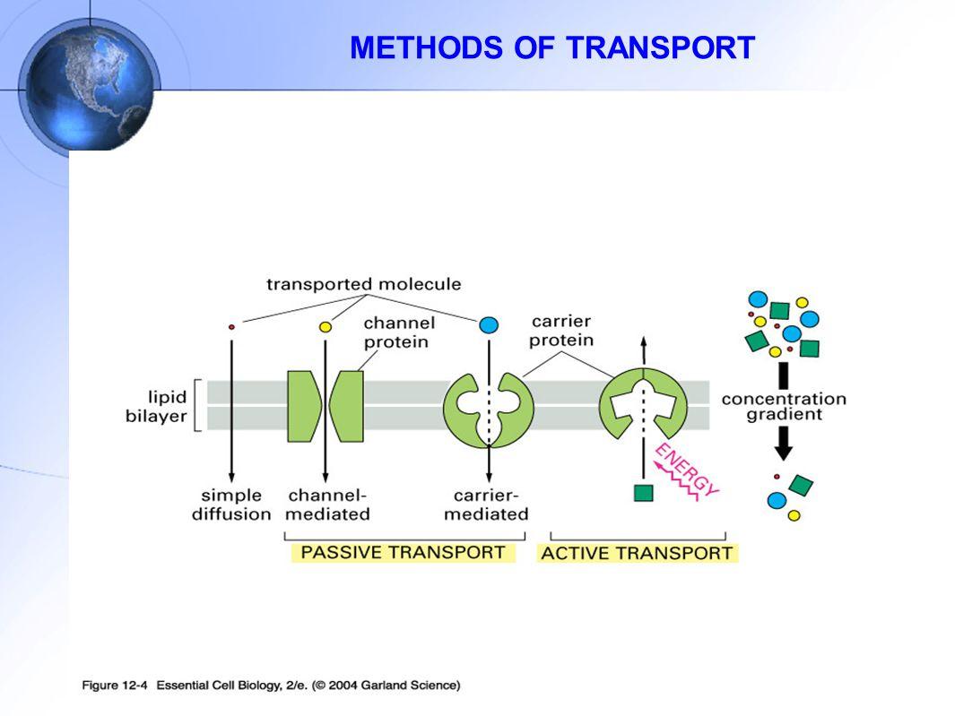 METHODS OF TRANSPORT