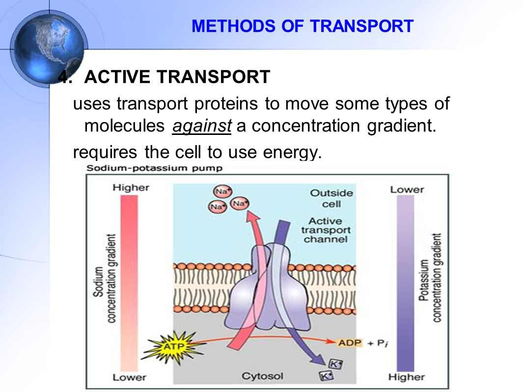 4.ACTIVE TRANSPORT uses transport proteins to move some types of molecules against a concentration gradient. requires the cell to use energy. METHODS