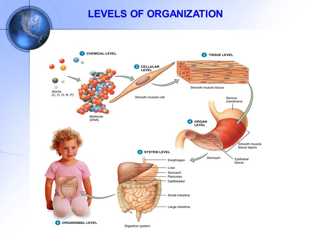 PROKARYOTE AND EUKARYOTE CELL
