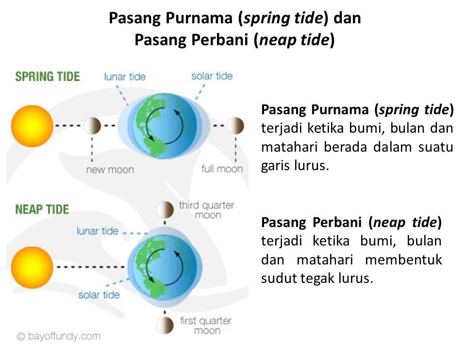 Pasang Purnama (spring tide) dan Pasang Perbani (neap tide) Pasang Purnama (spring tide) terjadi ketika bumi, bulan dan matahari berada dalam suatu ga