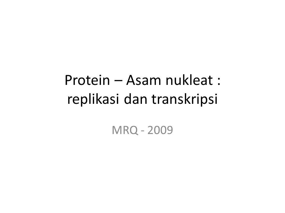 Protein – Asam nukleat : replikasi dan transkripsi MRQ - 2009