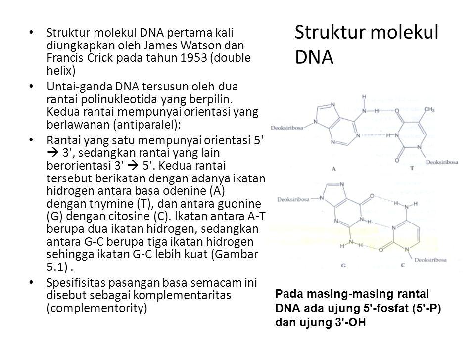 Struktur molekul DNA Struktur molekul DNA pertama kali diungkapkan oleh James Watson dan Francis Crick pada tahun 1953 (double helix) Untai-ganda DNA