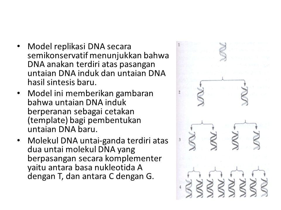 Model replikasi DNA secara semikonservatif menunjukkan bahwa DNA anakan terdiri atas pasangan untaian DNA induk dan untaian DNA hasil sintesis baru. M