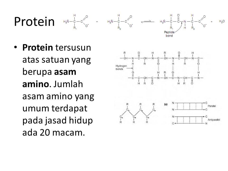 Protein Protein tersusun atas satuan yang berupa asam amino. Jumlah asam amino yang umum terdapat pada jasad hidup ada 20 macam.