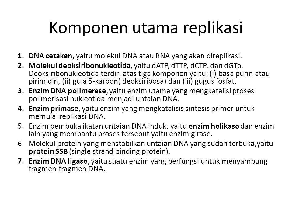 Komponen utama replikasi 1.DNA cetakan, yaitu molekul DNA atau RNA yang akan direplikasi. 2.Molekul deoksiribonukleotida, yaitu dATP, dTTP, dCTP, dan