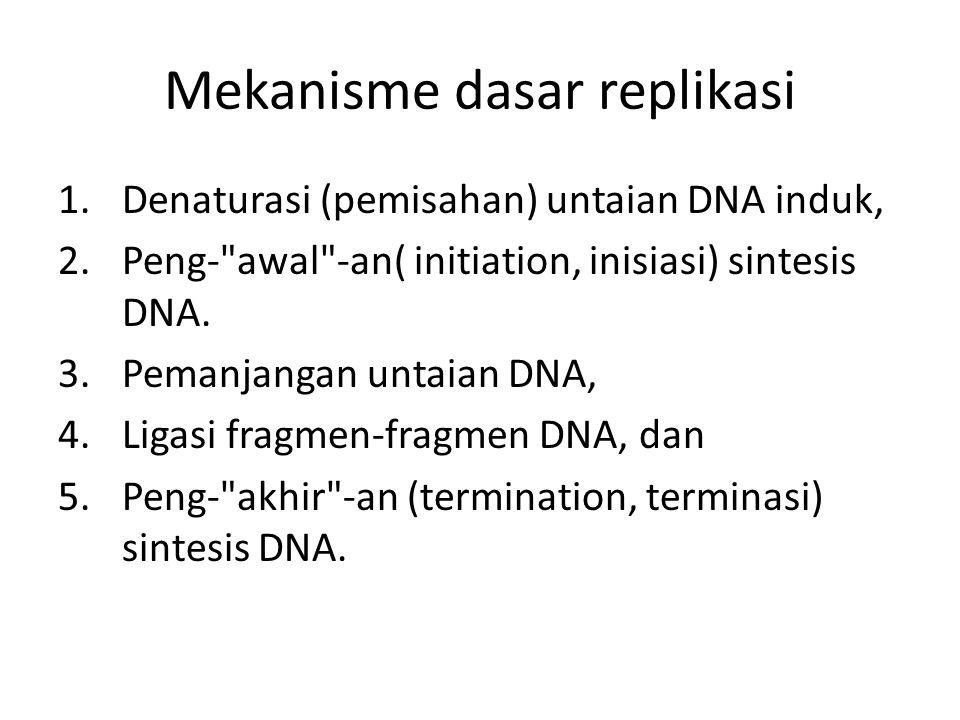 Mekanisme dasar replikasi 1.Denaturasi (pemisahan) untaian DNA induk, 2.Peng-