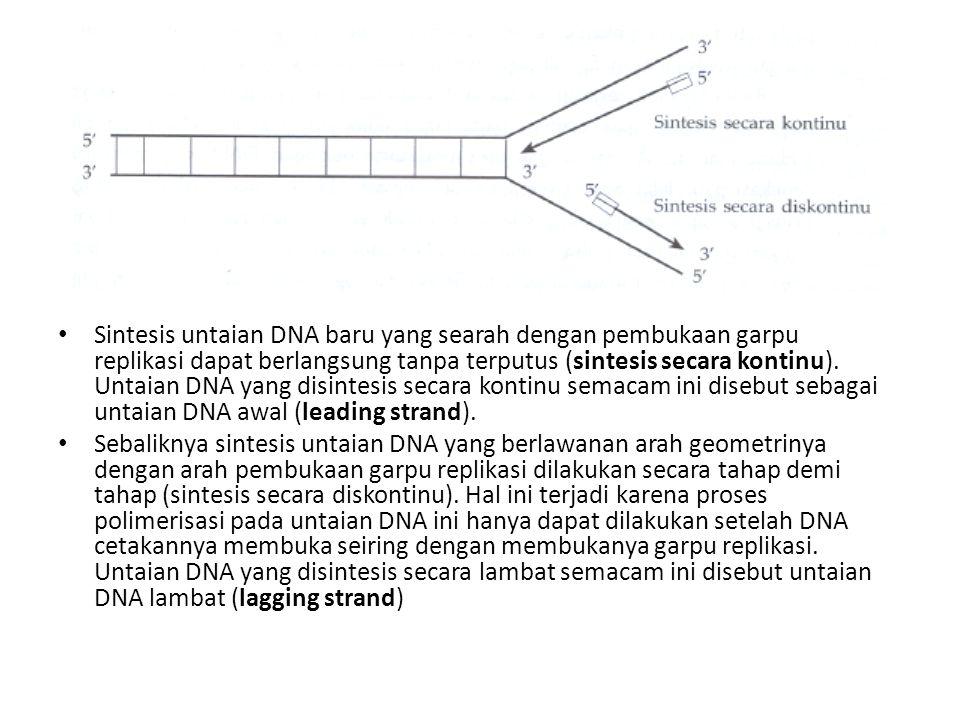Sintesis untaian DNA baru yang searah dengan pembukaan garpu replikasi dapat berlangsung tanpa terputus (sintesis secara kontinu). Untaian DNA yang di