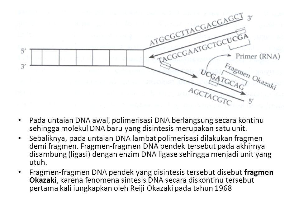 Pada untaian DNA awal, polimerisasi DNA berlangsung secara kontinu sehingga molekul DNA baru yang disintesis merupakan satu unit. Sebaliknya, pada unt