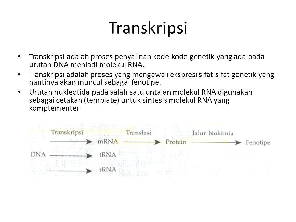 Transkripsi Transkripsi adalah proses penyalinan kode-kode genetik yang ada pada urutan DNA meniadi molekul RNA. Tianskripsi adalah proses yang mengaw