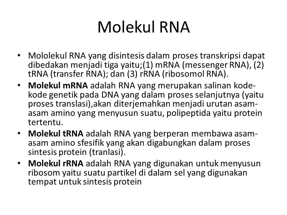 Molekul RNA Mololekul RNA yang disintesis dalam proses transkripsi dapat dibedakan menjadi tiga yaitu;(1) mRNA (messenger RNA), (2) tRNA (transfer RNA