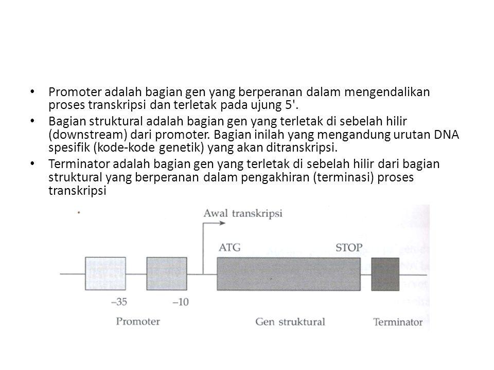 Promoter adalah bagian gen yang berperanan dalam mengendalikan proses transkripsi dan terletak pada ujung 5'. Bagian struktural adalah bagian gen yang