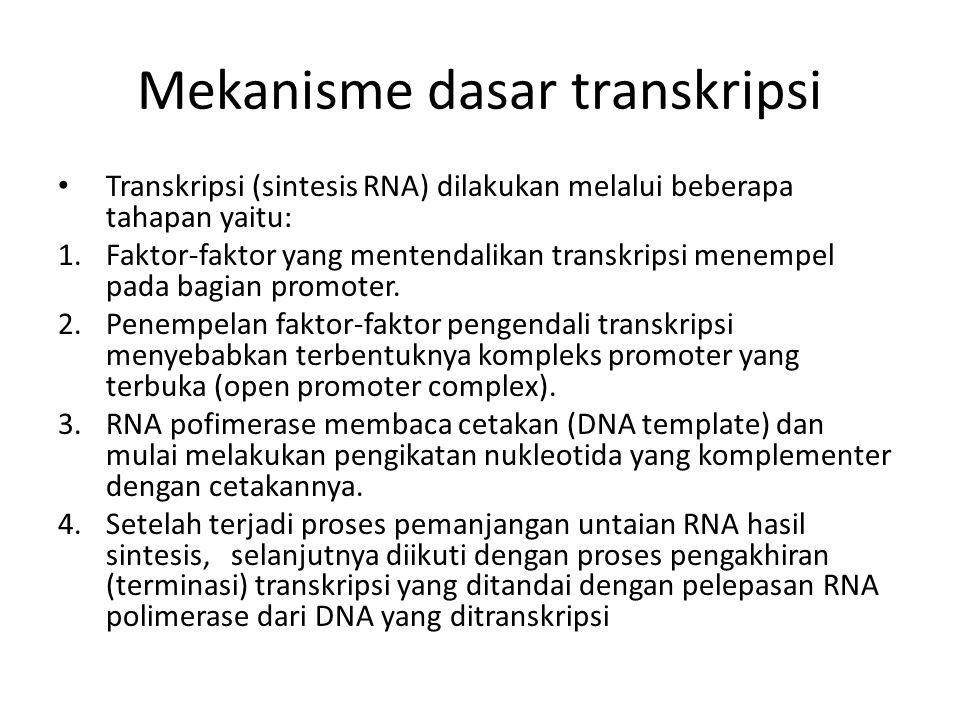 Mekanisme dasar transkripsi Transkripsi (sintesis RNA) dilakukan melalui beberapa tahapan yaitu: 1.Faktor-faktor yang mentendalikan transkripsi menemp