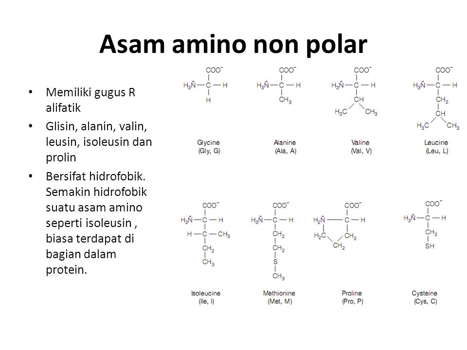 Asam amino non polar Memiliki gugus R alifatik Glisin, alanin, valin, leusin, isoleusin dan prolin Bersifat hidrofobik. Semakin hidrofobik suatu asam