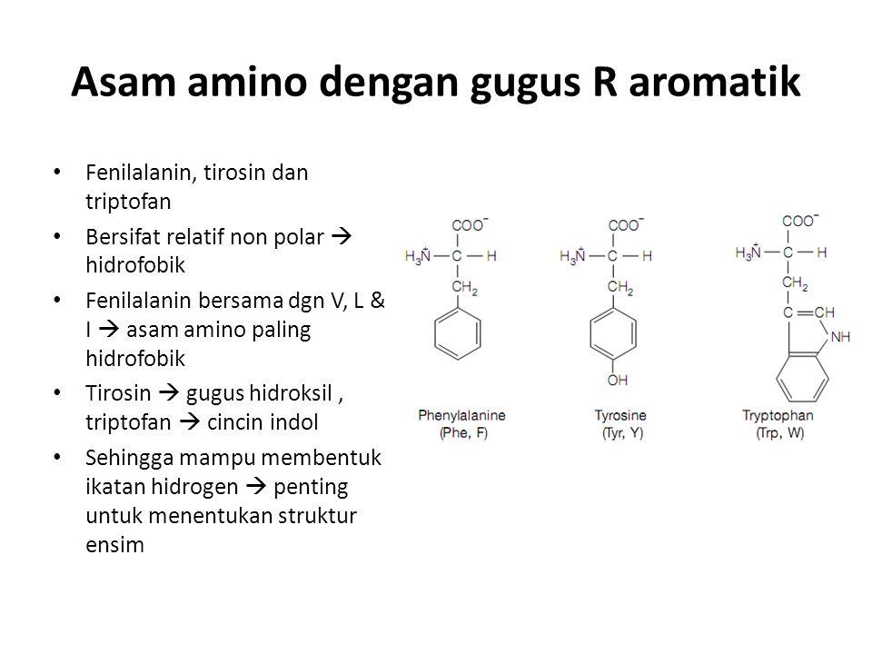 Asam amino dengan gugus R aromatik Fenilalanin, tirosin dan triptofan Bersifat relatif non polar  hidrofobik Fenilalanin bersama dgn V, L & I  asam