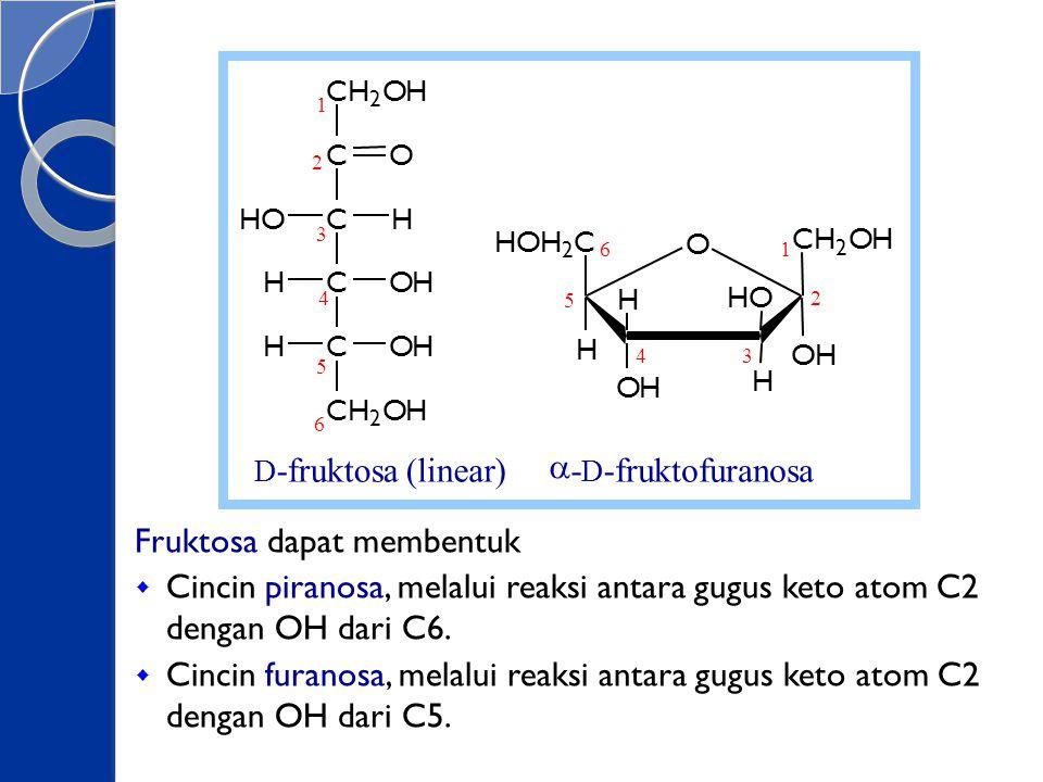 Fruktosa dapat membentuk  Cincin piranosa, melalui reaksi antara gugus keto atom C2 dengan OH dari C6.  Cincin furanosa, melalui reaksi antara gugus