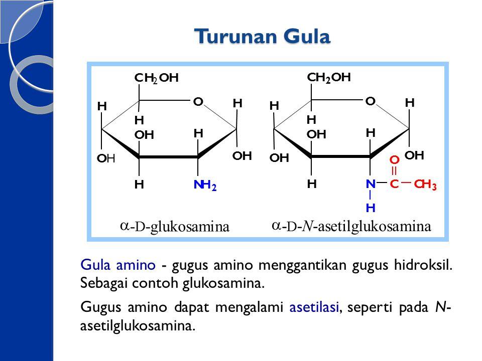 Turunan Gula Gula amino - gugus amino menggantikan gugus hidroksil. Sebagai contoh glukosamina. Gugus amino dapat mengalami asetilasi, seperti pada N-