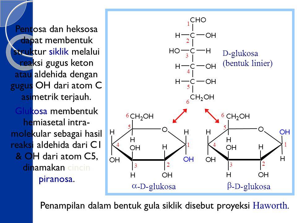 Pentosa dan heksosa dapat membentuk struktur siklik melalui reaksi gugus keton atau aldehida dengan gugus OH dari atom C asimetrik terjauh. Glukosa me