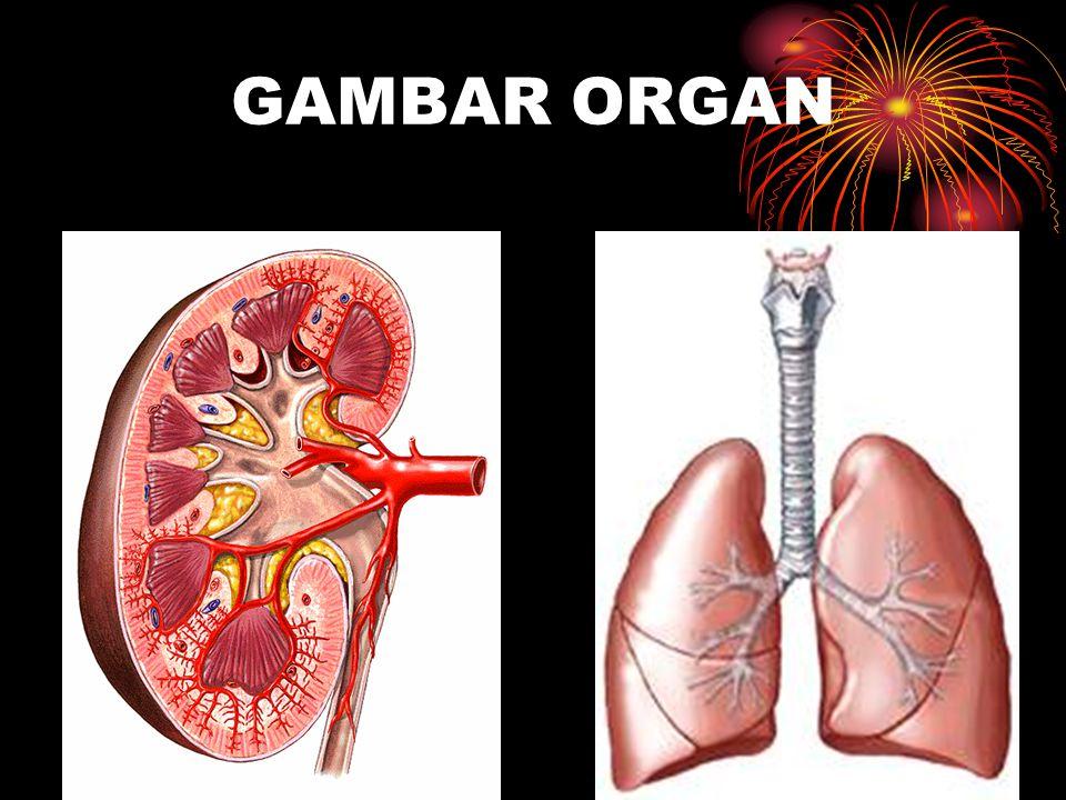 GAMBAR ORGAN