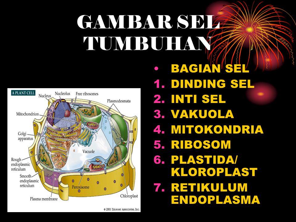 GAMBAR SEL TUMBUHAN BAGIAN SEL 1.DINDING SEL 2.INTI SEL 3.VAKUOLA 4.MITOKONDRIA 5.RIBOSOM 6.PLASTIDA/ KLOROPLAST 7.RETIKULUM ENDOPLASMA