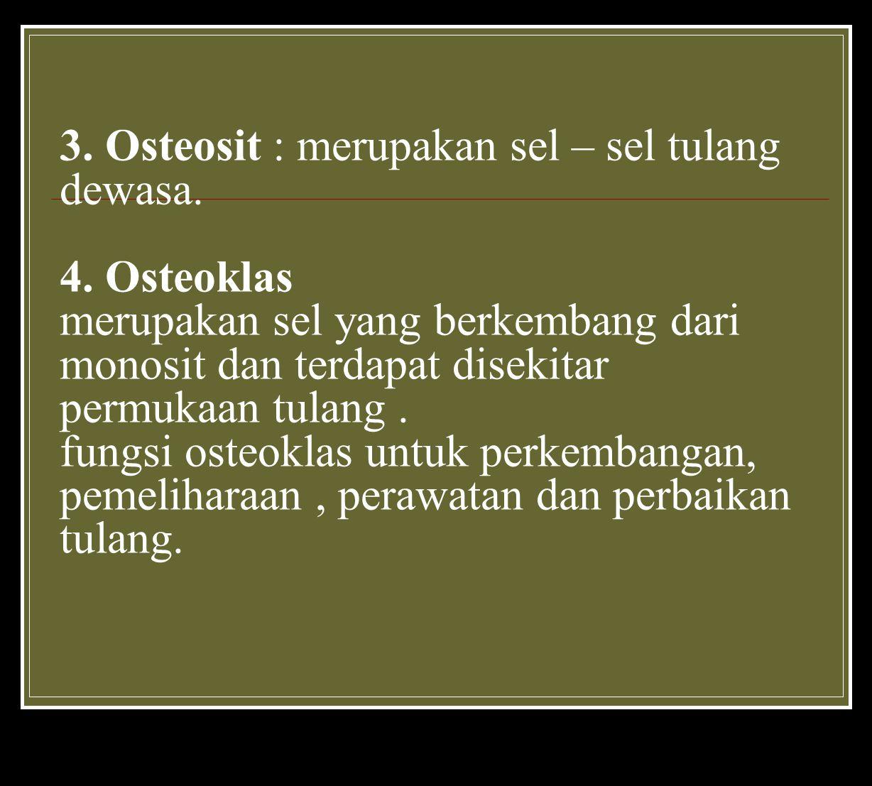 3.Osteosit : merupakan sel – sel tulang dewasa. 4.