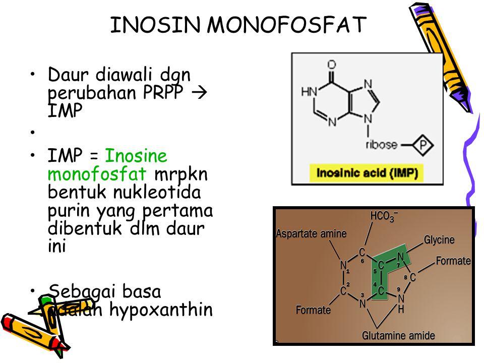 INOSIN MONOFOSFAT Daur diawali dgn perubahan PRPP  IMP IMP = Inosine monofosfat mrpkn bentuk nukleotida purin yang pertama dibentuk dlm daur ini Sebagai basa adalah hypoxanthin