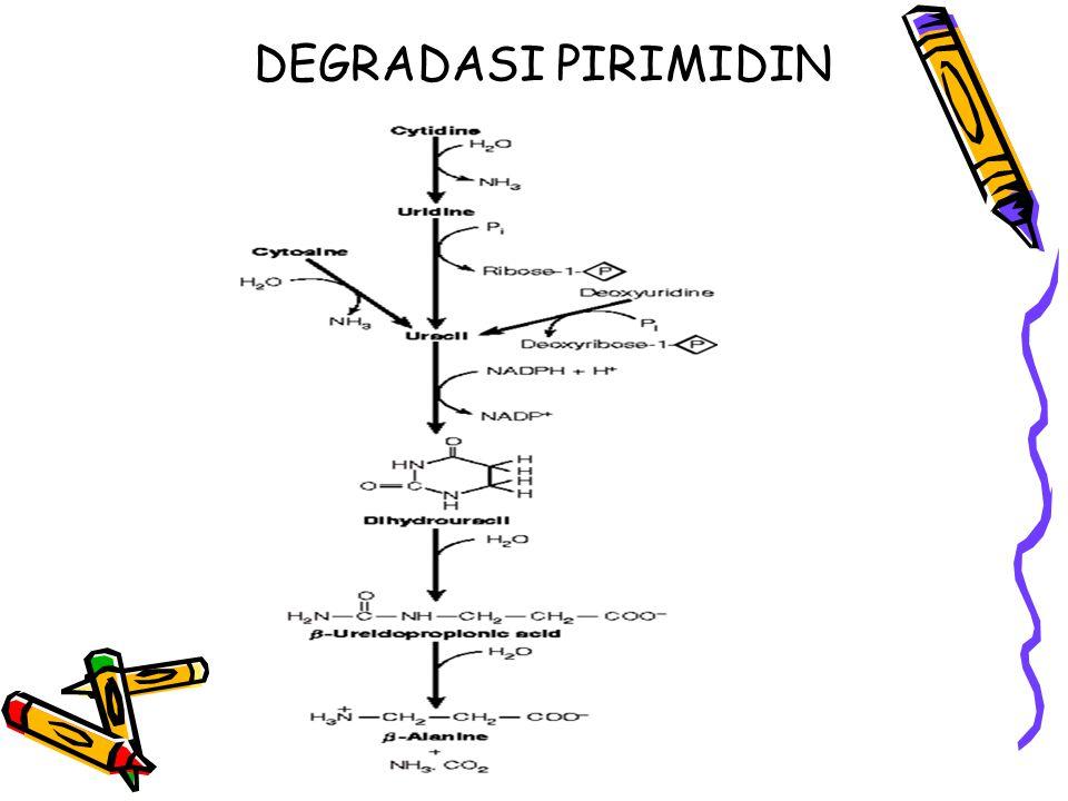DEGRADASI PIRIMIDIN