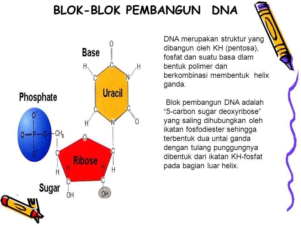 BLOK-BLOK PEMBANGUN DNA DNA merupakan struktur yang dibangun oleh KH (pentosa), fosfat dan suatu basa dlam bentuk polimer dan berkombinasi membentuk h
