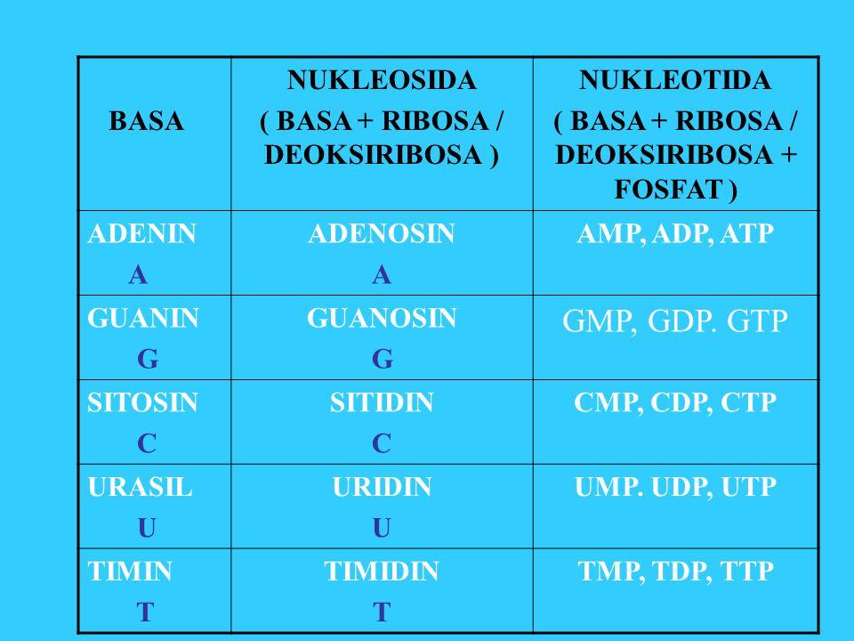 BASA NUKLEOSIDA ( BASA + RIBOSA / DEOKSIRIBOSA ) NUKLEOTIDA ( BASA + RIBOSA / DEOKSIRIBOSA + FOSFAT ) ADENIN A ADENOSIN A AMP, ADP, ATP GUANIN G GUANO