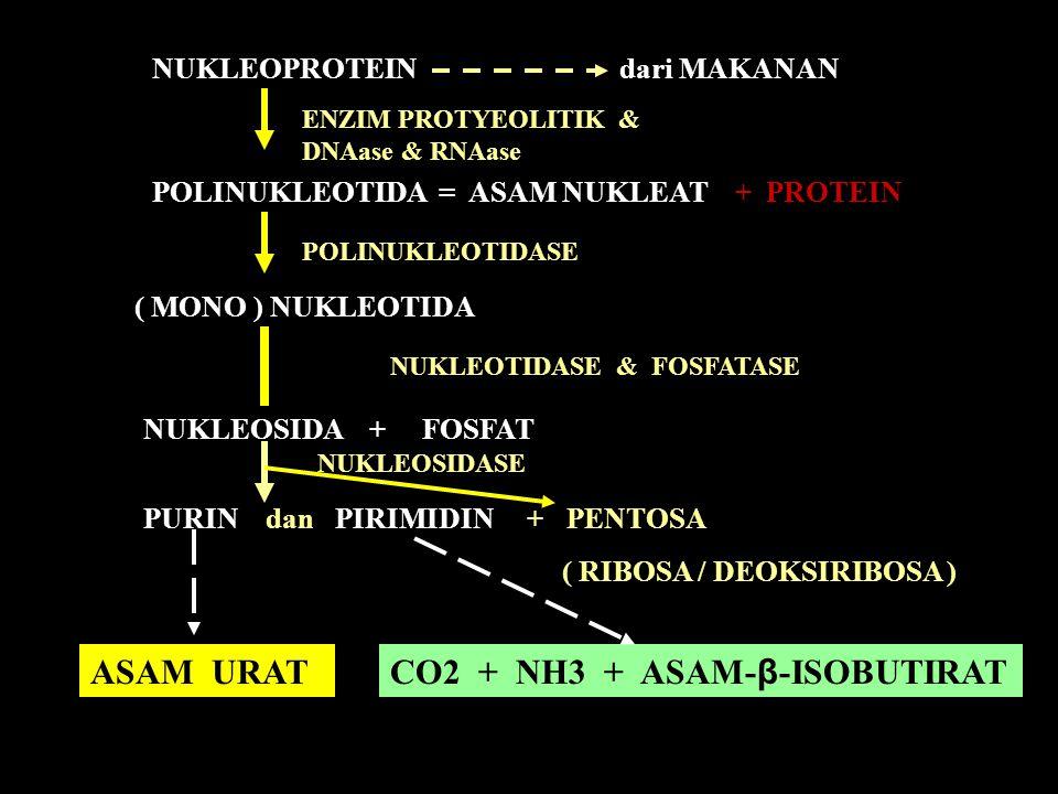NUKLEOPROTEIN dari MAKANAN POLINUKLEOTIDA = ASAM NUKLEAT + PROTEIN ( MONO ) NUKLEOTIDA NUKLEOSIDA + FOSFAT PURIN dan PIRIMIDIN + PENTOSA ( RIBOSA / DE