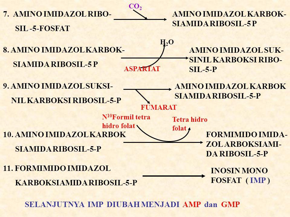7. AMINO IMIDAZOL RIBO- SIL -5-FOSFAT AMINO IMIDAZOL KARBOK- SIAMIDA RIBOSIL-5 P CO 2 8. AMINO IMIDAZOL KARBOK- SIAMIDA RIBOSIL-5 P AMINO IMIDAZOL SUK