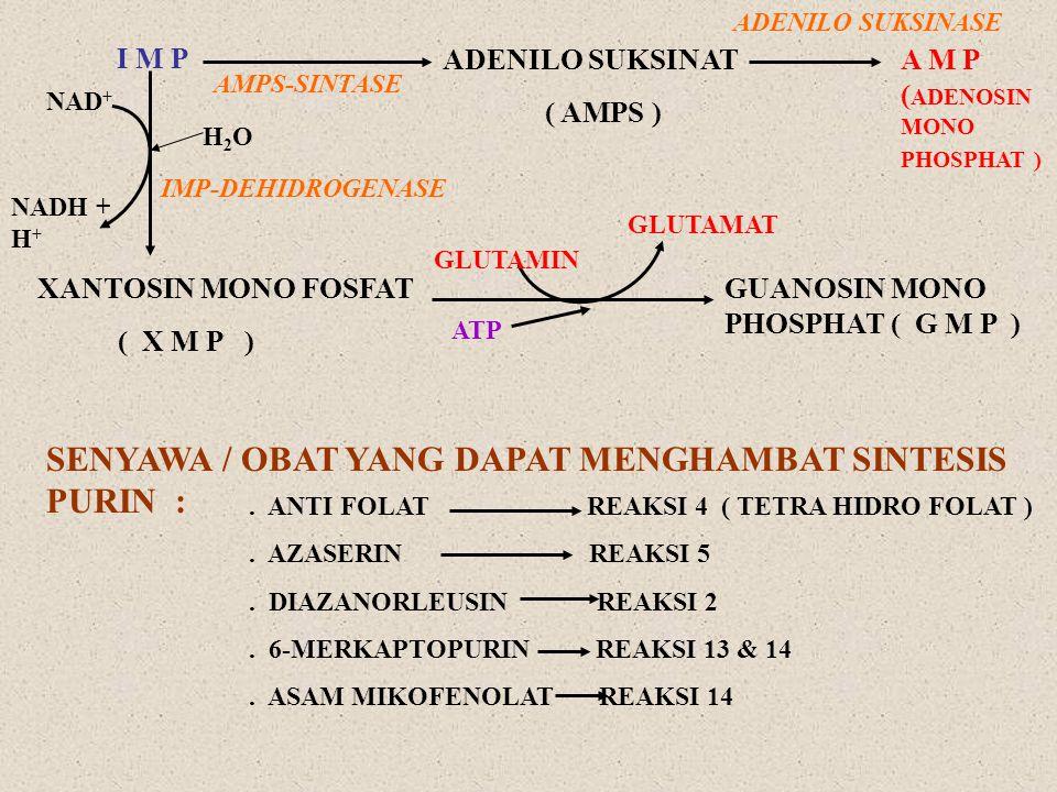 I M P ADENILO SUKSINAT ( AMPS ) A M P ( ADENOSIN MONO PHOSPHAT ) AMPS-SINTASE ADENILO SUKSINASE NAD + NADH + H + H2O H2O IMP-DEHIDROGENASE XANTOSIN MO