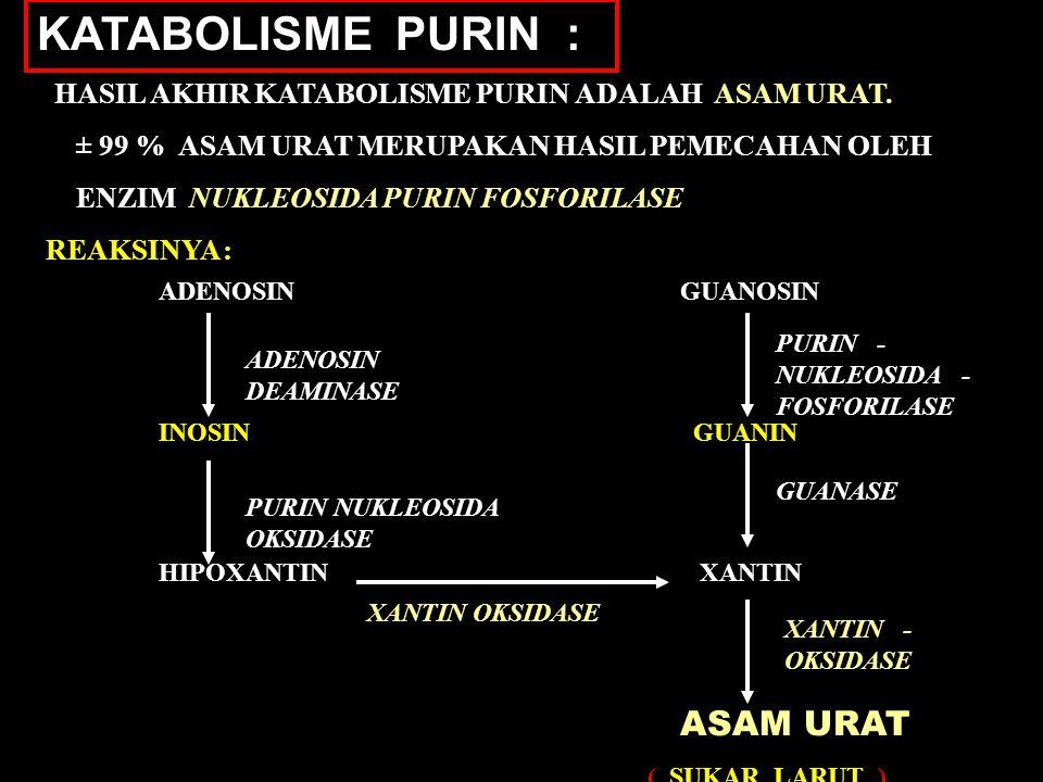 KATABOLISME PURIN : HASIL AKHIR KATABOLISME PURIN ADALAH ASAM URAT. ± 99 % ASAM URAT MERUPAKAN HASIL PEMECAHAN OLEH ENZIM NUKLEOSIDA PURIN FOSFORILASE
