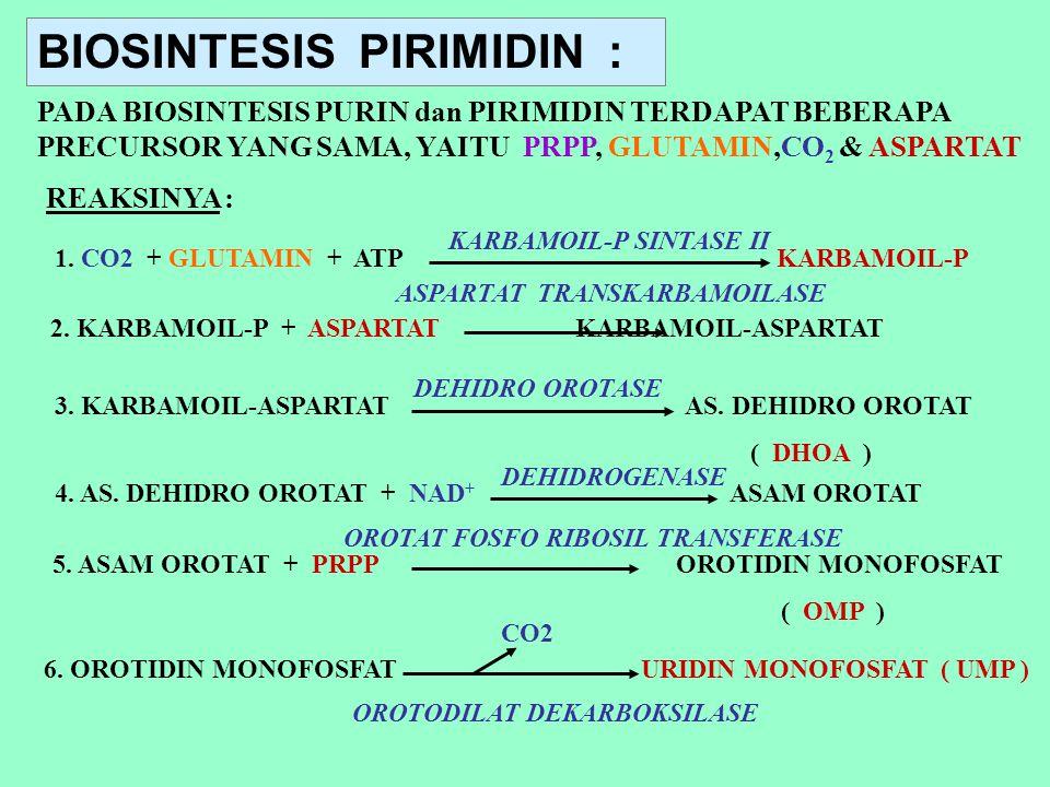BIOSINTESIS PIRIMIDIN : PADA BIOSINTESIS PURIN dan PIRIMIDIN TERDAPAT BEBERAPA PRECURSOR YANG SAMA, YAITU PRPP, GLUTAMIN,CO 2 & ASPARTAT REAKSINYA : 1
