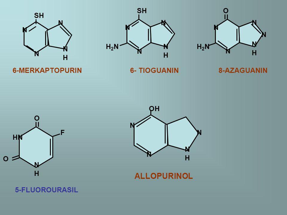 SH N N N NHNH 6-MERKAPTOPURIN 6- TIOGUANIN 8-AZAGUANIN SH N N N NHNH H2NH2N O N H2NH2N N NHNH N N O HN O F NHNH 5-FLUOROURASIL OH N N N NHNH ALLOPURIN