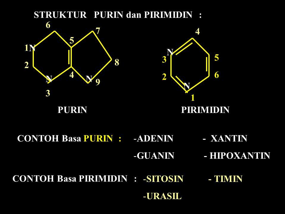 STRUKTUR PURIN dan PIRIMIDIN : N N N N N PURIN PIRIMIDIN 1212 6363 54 54 79 79 8 1 3 2 4 5656 CONTOH Basa PURIN :-ADENIN - XANTIN -GUANIN - HIPOXANTIN