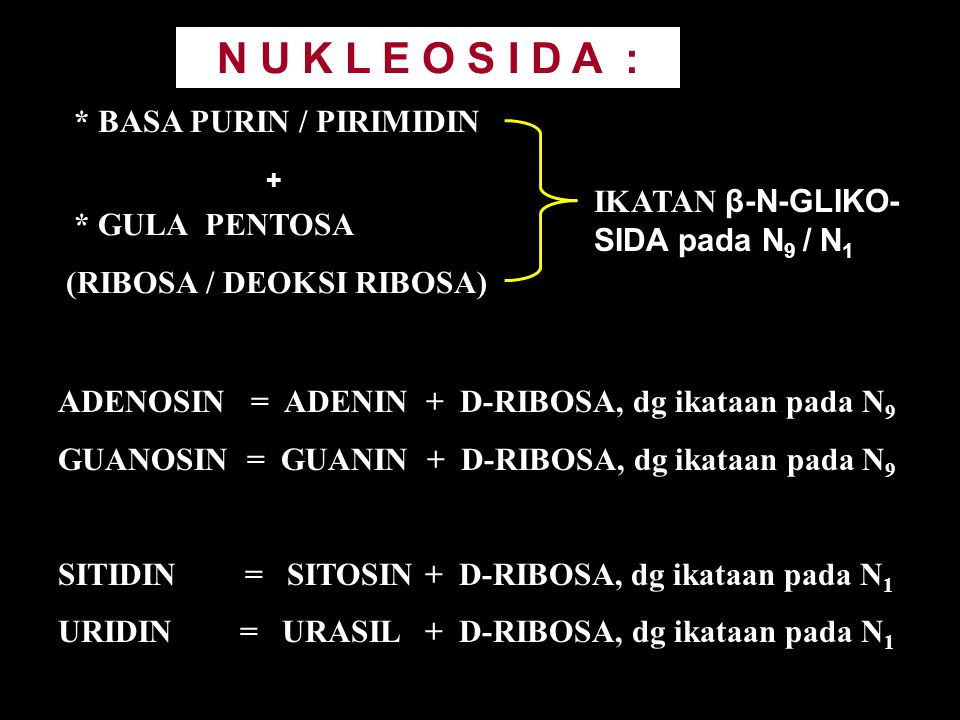 N U K L E O S I D A : * BASA PURIN / PIRIMIDIN * GULA PENTOSA (RIBOSA / DEOKSI RIBOSA) IKATAN β-N-GLIKO- SIDA pada N 9 / N 1 ADENOSIN = ADENIN + D-RIB