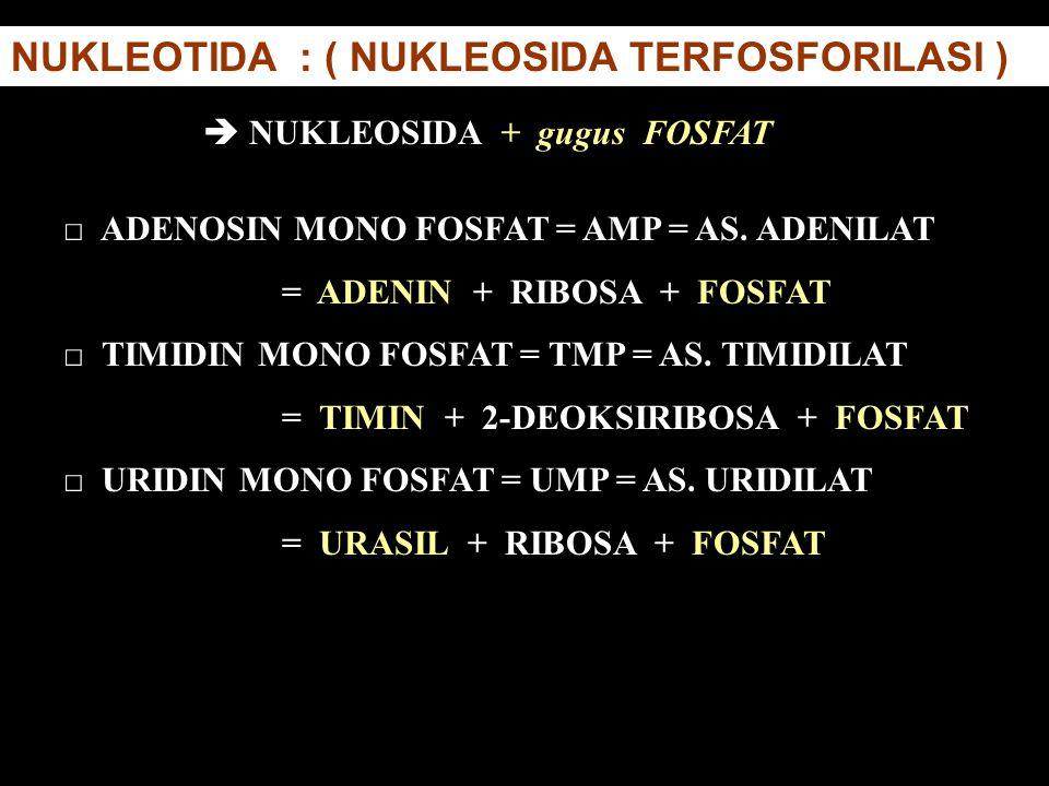 NUKLEOTIDA : ( NUKLEOSIDA TERFOSFORILASI ) □ ADENOSIN MONO FOSFAT = AMP = AS. ADENILAT = ADENIN + RIBOSA + FOSFAT □ TIMIDIN MONO FOSFAT = TMP = AS. TI