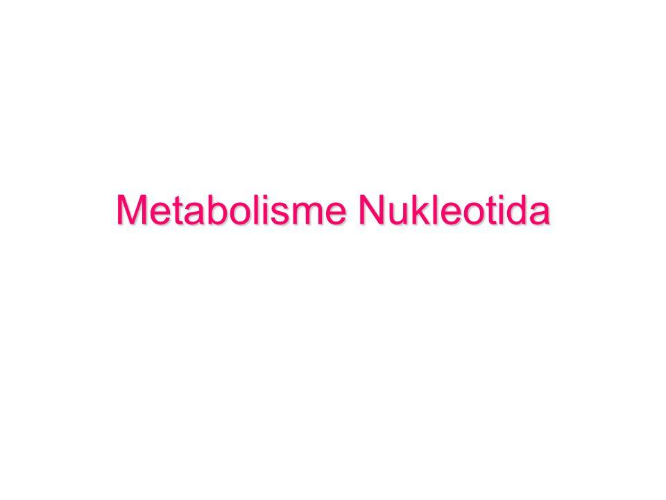 Metabolisme Nukleotida