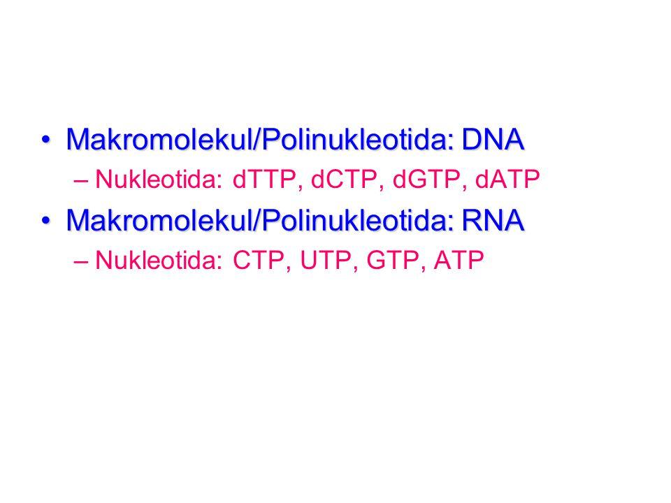 Makromolekul/Polinukleotida: DNAMakromolekul/Polinukleotida: DNA –Nukleotida: dTTP, dCTP, dGTP, dATP Makromolekul/Polinukleotida: RNAMakromolekul/Poli