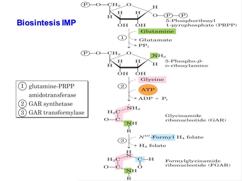 Biosintesis IMP