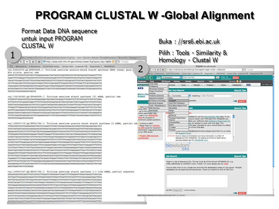 Format Data DNA sequence untuk input PROGRAM CLUSTAL W 1 1 2 2 Buka : //srs6.ebi.ac.uk Pilih : Tools - Similarity & Homology - Clustal W Buka : //srs6