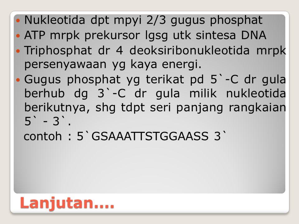 Lanjutan.... Nukleotida dpt mpyi 2/3 gugus phosphat ATP mrpk prekursor lgsg utk sintesa DNA Triphosphat dr 4 deoksiribonukleotida mrpk persenyawaan yg