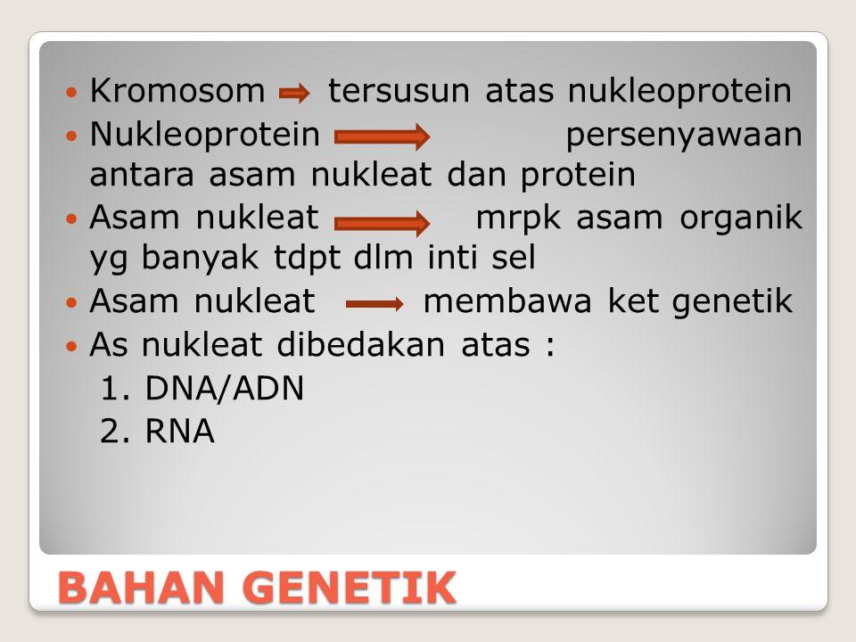 Perbandingan basa nitrogen dlm DNA DNA dr nukleus timus anak sapi t.d.