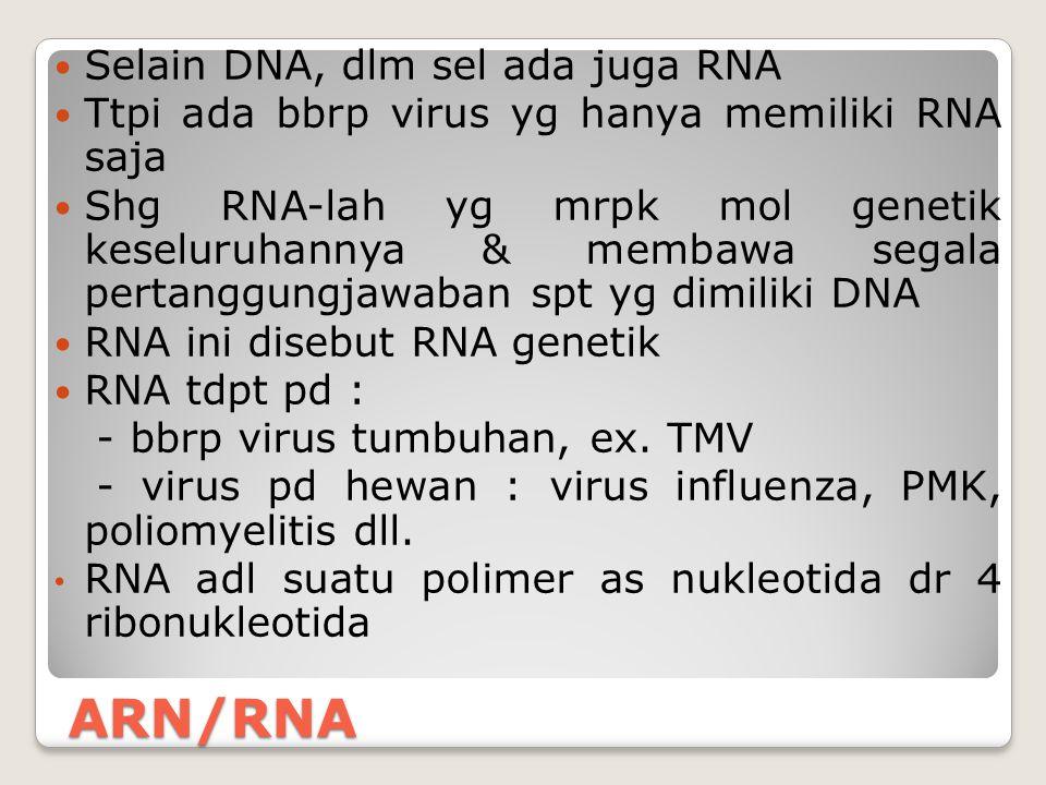 ARN/RNA Selain DNA, dlm sel ada juga RNA Ttpi ada bbrp virus yg hanya memiliki RNA saja Shg RNA-lah yg mrpk mol genetik keseluruhannya & membawa segal