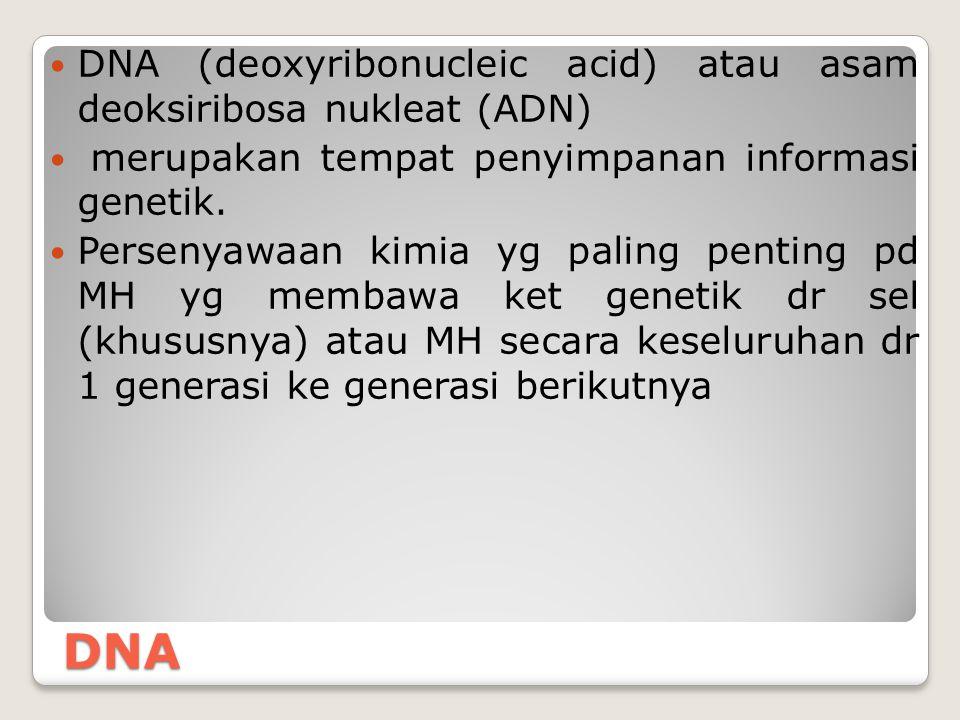 DNA DNA (deoxyribonucleic acid) atau asam deoksiribosa nukleat (ADN) merupakan tempat penyimpanan informasi genetik. Persenyawaan kimia yg paling pent